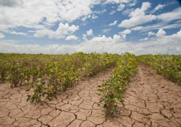 Developing countries water needings for agriculture are urgent